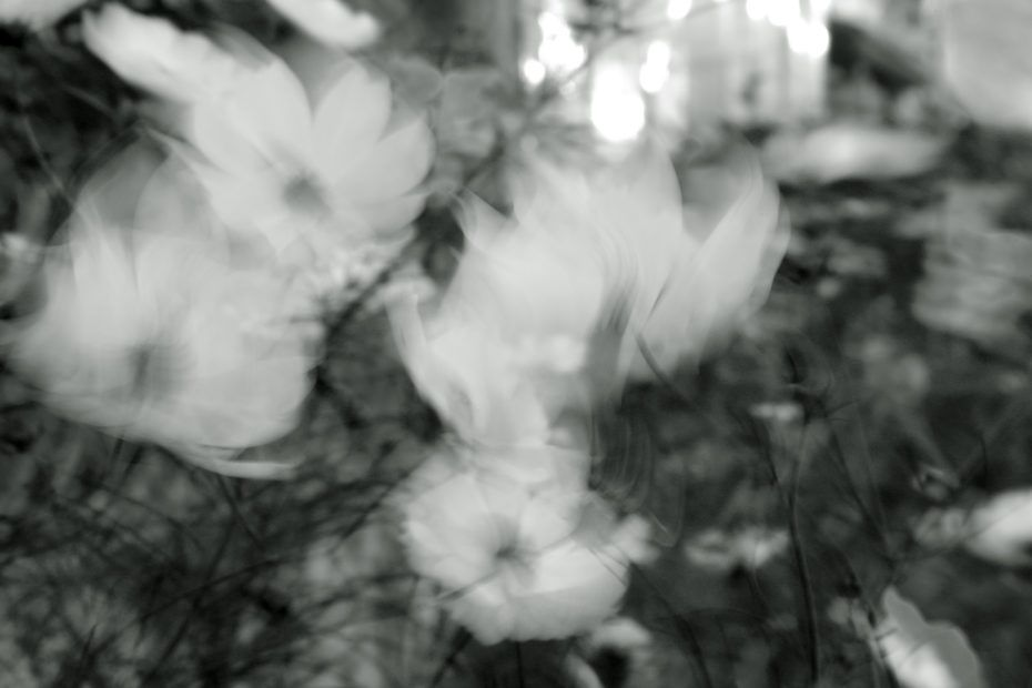 266/366 days photography season 8